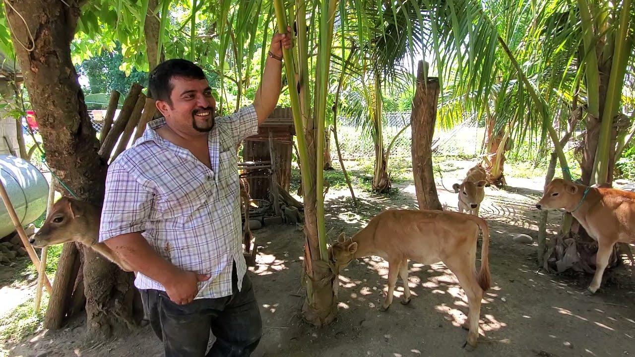 Aquí Entregamos Las Terneras Yersi Ya en el Salvador