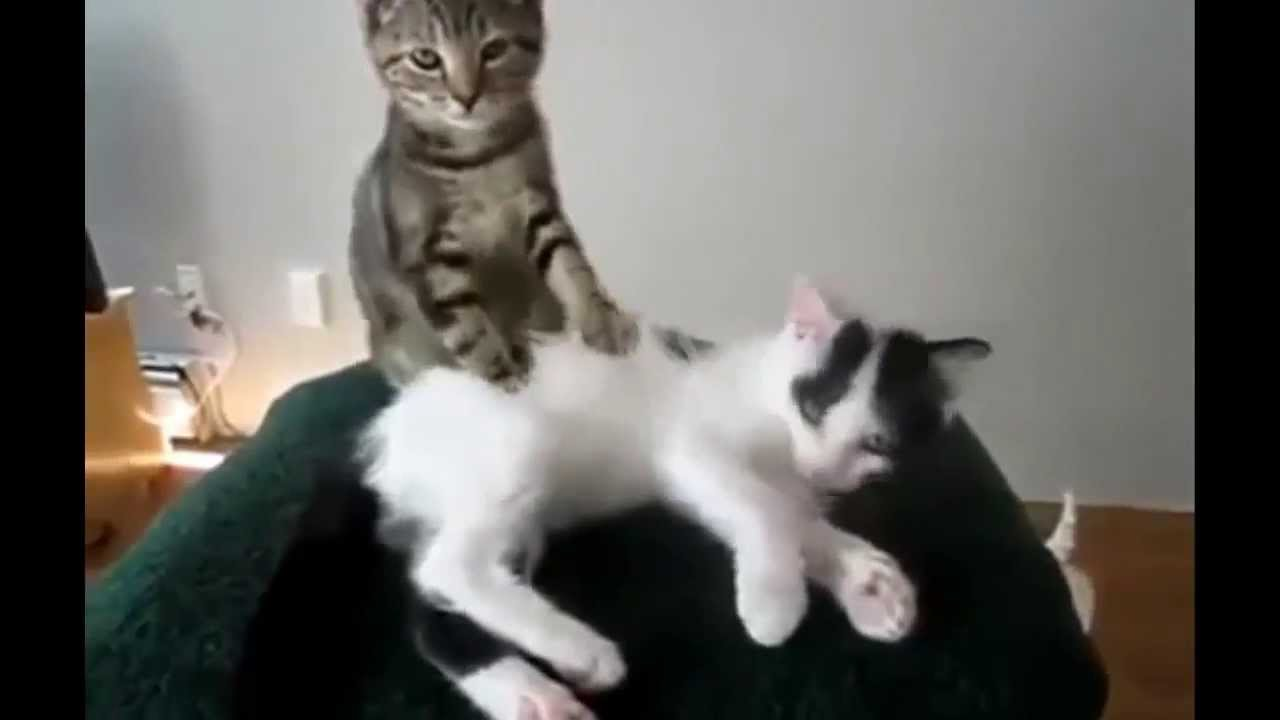 Compilation de chats - YouTube