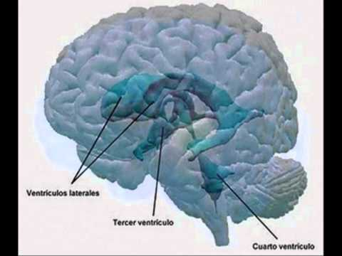 Anatomia Meninges , Sist.Ventricular , LCR.wmv - YouTube
