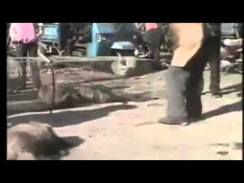 JoeExoticTv episode Animal Abuse in China