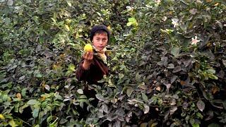 Коронавирус и урожай в Таджикистане в Бишкеке открываются два ночных стационара