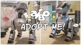 aibo ers-111 [ Baby Robo ] for sale! *SOLD* [ & talking about future videos ]