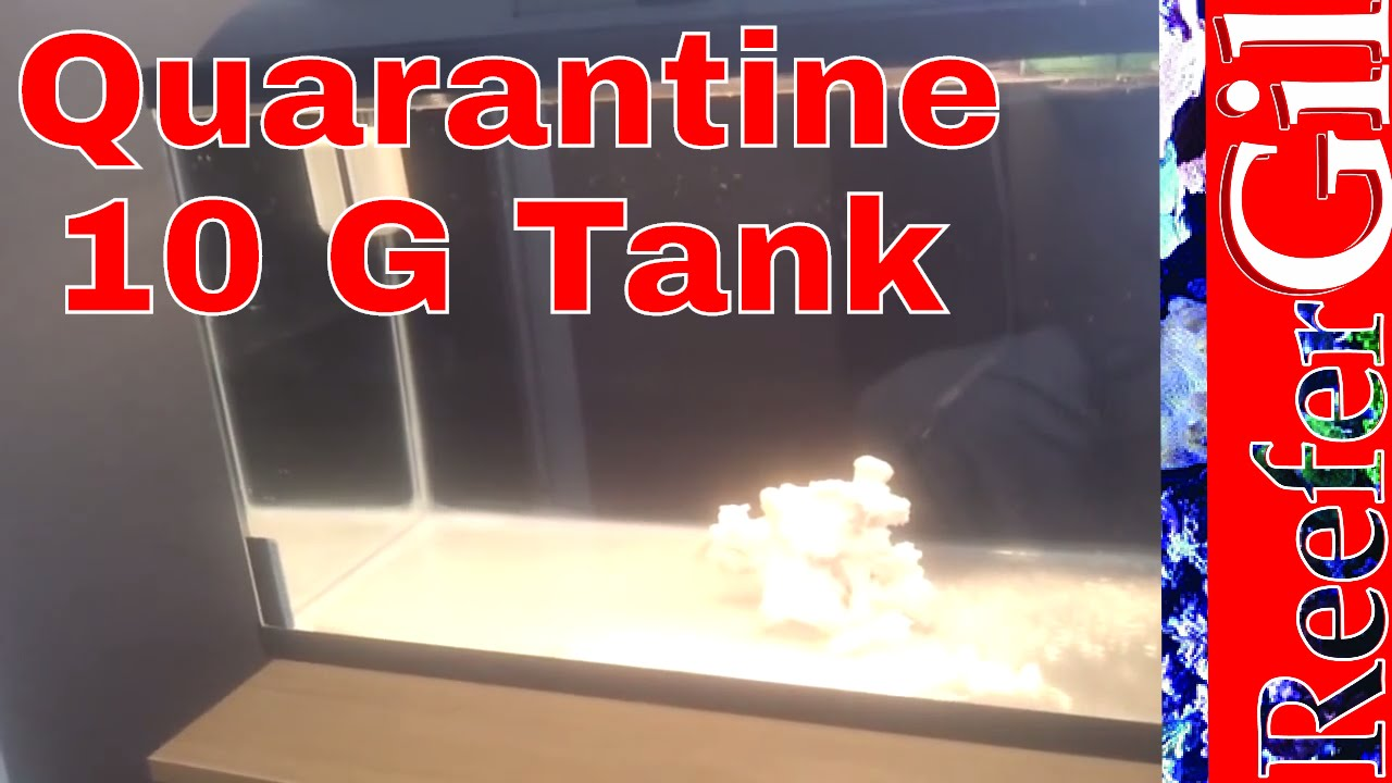 Fish tank quarantine - How To Setup A Quarantine Tank Setup 2016 11 15