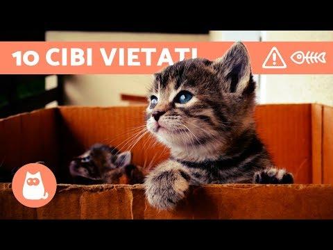 10 CIBI VIETATI ai gatti - ALIMENTAZIONE del gatto: cibi da evitare