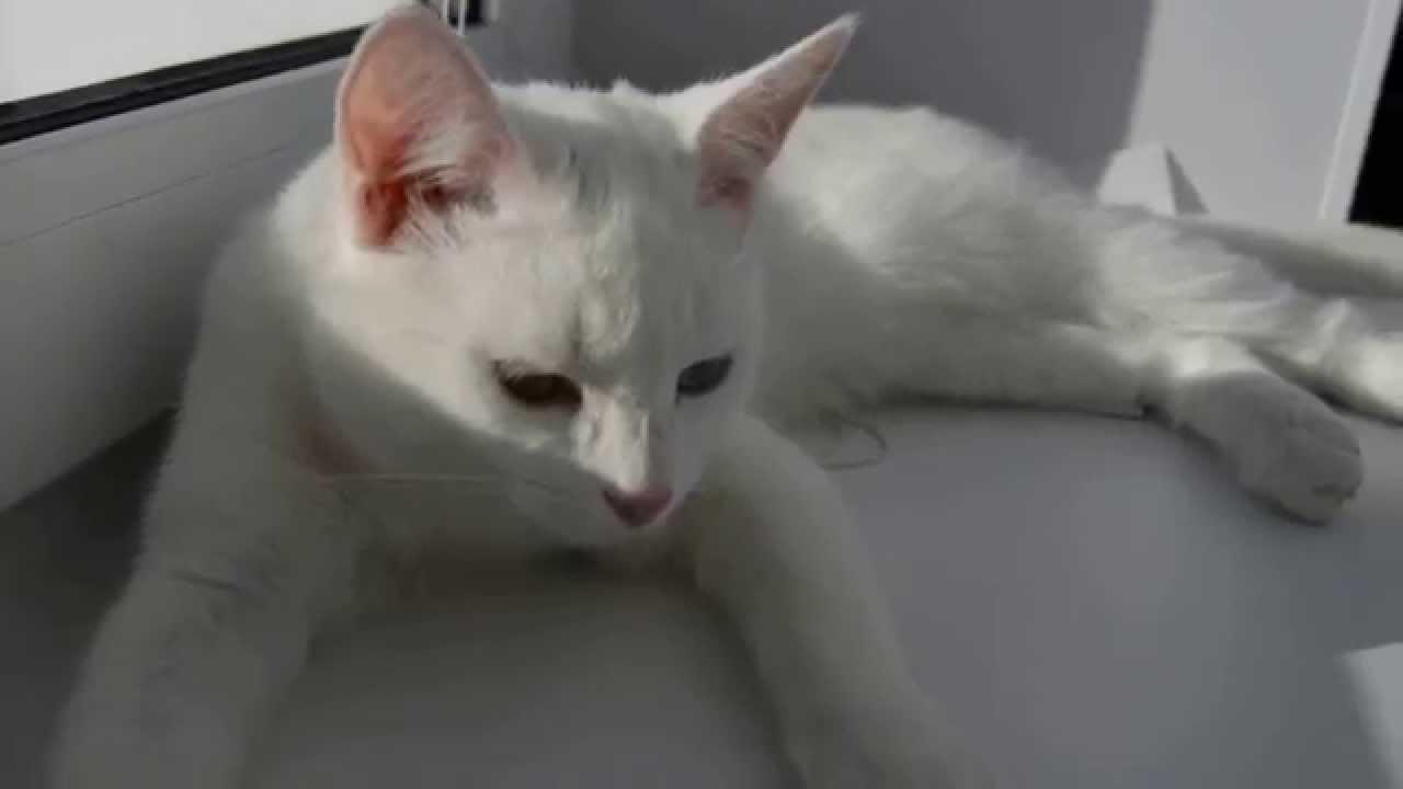 Картинки белых котов и новая природа