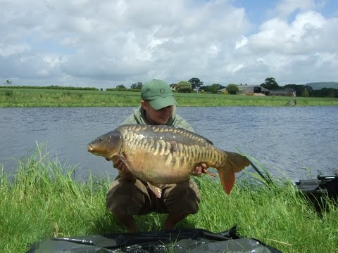 Huge Carp Haul On New Day-ticket Water
