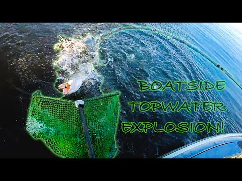 Boatside Topwater EXPLOSION! (How To Figure 8 Topwaters) Guiding On LOTW