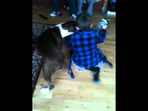 Cat Scares Dog Attacking Kid