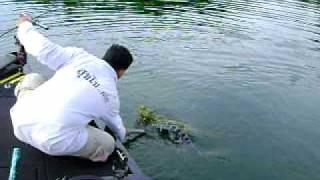 ตกปลาชะโด เขื่อนเขาแหลม 17   7   2011