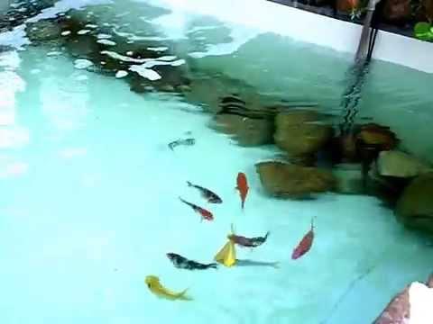 Carpas lago artificial laguinho ornamental youtube for Como construir un lago artificial