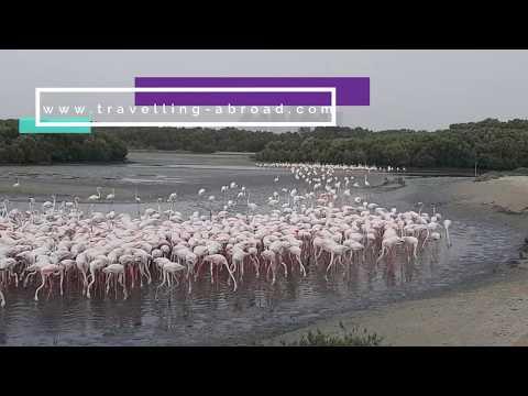 Ras Al Khor Wildlife Sanctuary Dubai   Ras Al khor Flamingo Hide Viewing Area