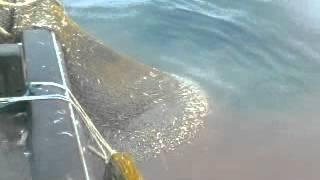 kapal malaisya dapat ikanbiliz guna pukat harimau