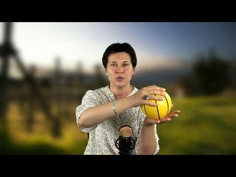 Упражнения с мячом – мультицелевые занятия в помощь логопеду и психологу