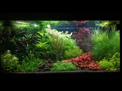 Juwel Rio 350 LED aquarium setup