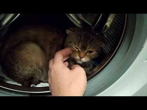 Как постирать кота? Деликатная стирка!🧺🐱
