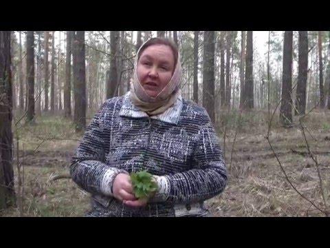 Секреты монастырской травницы Елены Федоровны Зайцевой