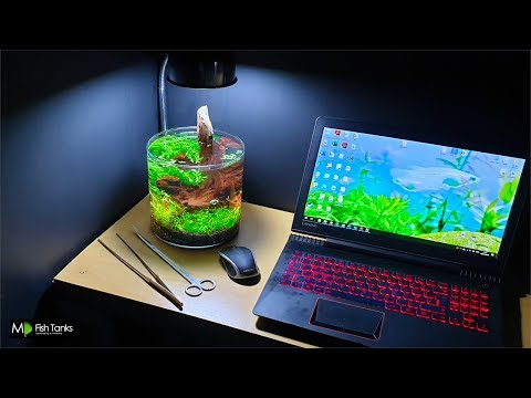 CUTE Little Desk Aquarium (How To Aquascape: No Filter, No Ferts, No co2, No Heater)