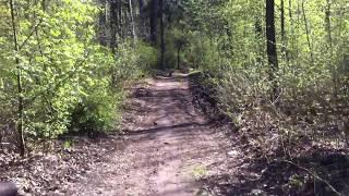 Лиса орёт на весь лес. Тольятти (Лес между Центральным и Автозаводским районами)