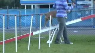 Amstaff Agility Dog Training - Beginner Class - 5/6/2010