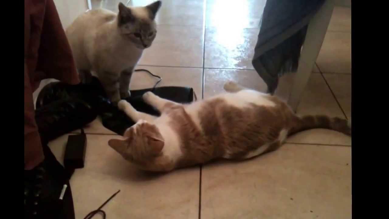 chat se eskorte drammen