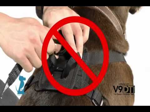 Using Your Bergan Pet Travel Safety Harness Petco How To Youtube