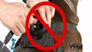 Using Your Bergan Pet Travel Safety Harness - Petco How-to