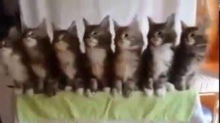 смешные милые котики танцуют под музыку забавно