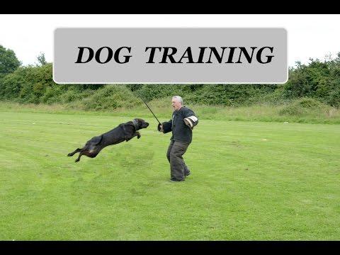 Dog Training Doris