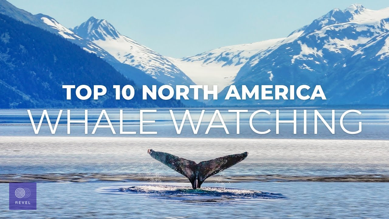 Top 10 Whale Watching Destinations | Best Whale Watching Trips in North America