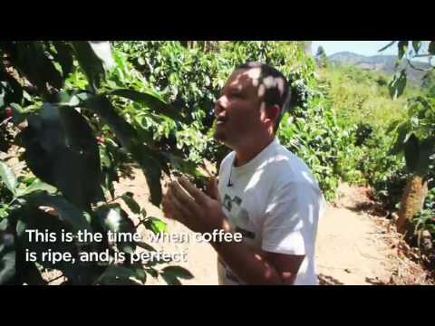 Coffee Grower Juan Jose talks about his coffee – Cafédirect