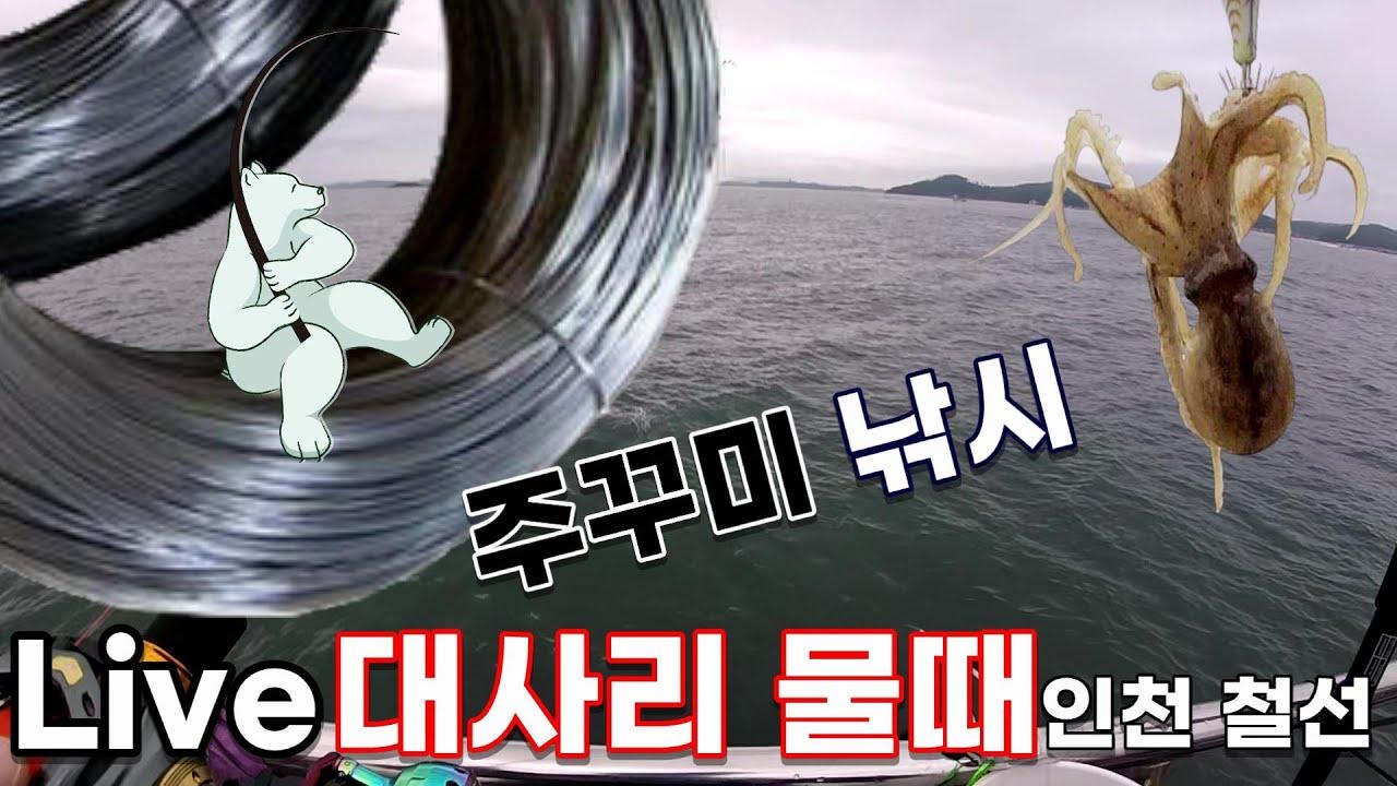 대사리물때 인천 철선에서 주꾸미 낚시!!