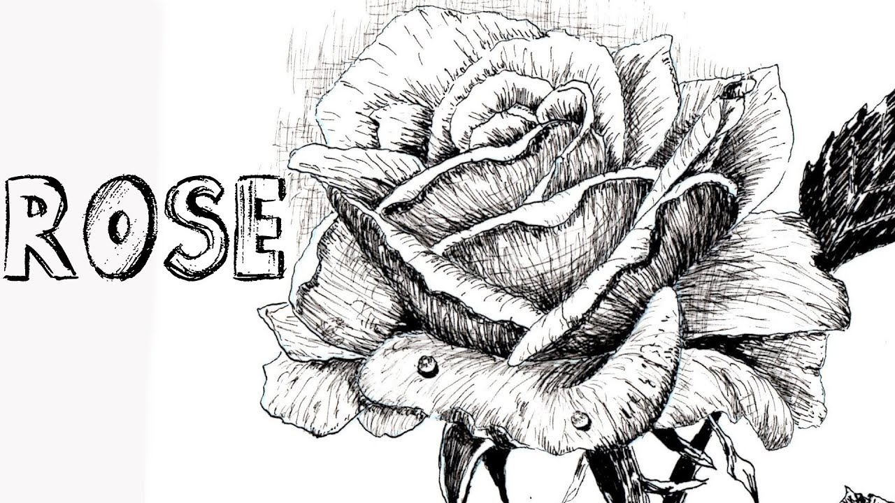 How To Draw A Rose In Pen & Ink 1