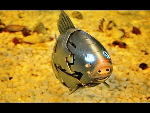 Cientificos crearon un pez robot y mira lo que paso