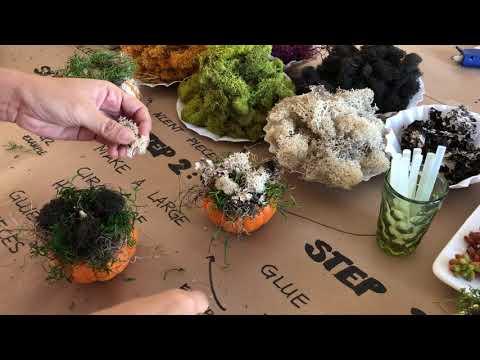 diy-diffuser-succulent-pumpkin