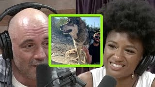 Joe Rogan On What's Really Depressing About a Wolf Sanctuary