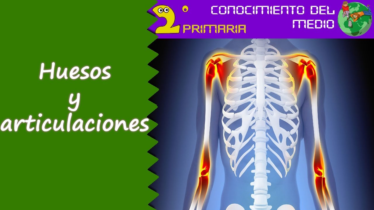 Cono, 2º de Primaria. Tema 1. Los huesos y las articulaciones - YouTube
