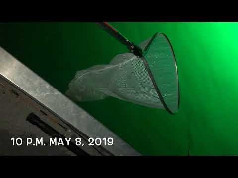 Night Fishing And Shrimping | Merritt Island Wildlife Refuge | May 8, 2019