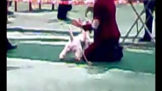 выставка собак в туле.mp4