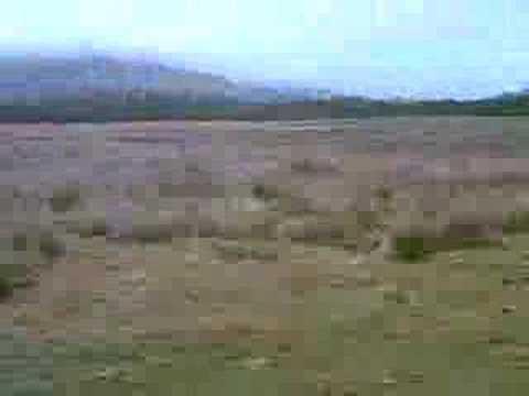 Sheep near Kilchurn Castle