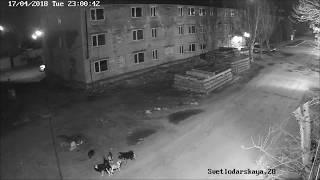 """Веб камеры в Славянске ул Светлодарская, д 28 """"будьте осторожны бродячие собаки"""""""