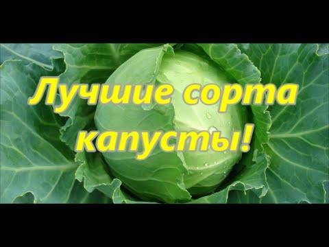 Переезд в деревню - Лучшие сорта капусты!