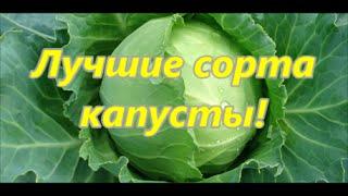 видео Популярные сорта белокочанной капусты.