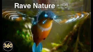 Over ³⁶⁰ : Rave Nature  ⁴ᴷ