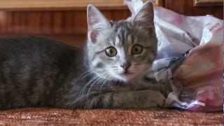Чудо-кот