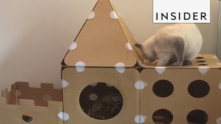 Playhouses for Cats