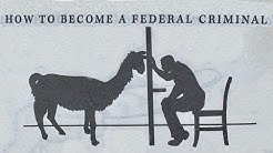 You Can Get 5 Years in Prison for Selling Llama Poop. A Chronicle of Our Most Ludicrous Laws