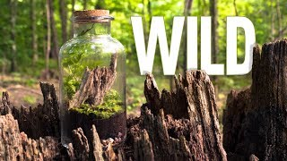 Let's Make a Terrarium in the Wilderness
