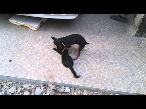 Funny videos - Funny new clips - Funniest recent animals - June 2015 from YouTube · Duration:  2 minutes 28 seconds