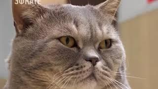 В Сочи стали чаще стерилизовать домашних животных. Новости Эфкате Сочи