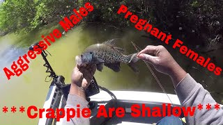 Crappie Fishing Shallow Water.. Spawning Crappie